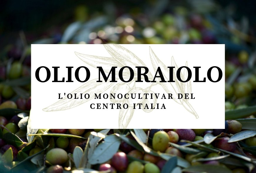 MORAIOLO OIL – THE TYPICAL MONOCULTIVAR OF CENTRAL ITALY